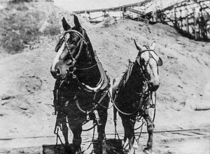 1910 Richmond Beach bunkers draft horses