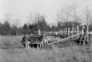 1939 Stile in pasture on the way to school