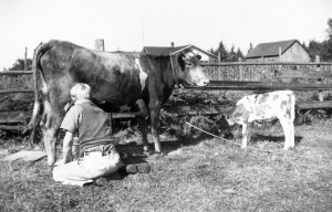 1943 Norman Hansen, his cow, Sukey, and her calf , Richmond Beach