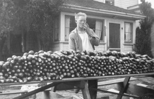 1945-08 Norman Hansen with a morning picking of zucchini